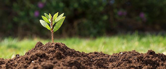 Biodiversidade do solo precisa ser mais valorizada nas políticas públicas globais
