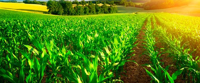 Catálogo de insumos naturais e biológicos para uso na agropecuária