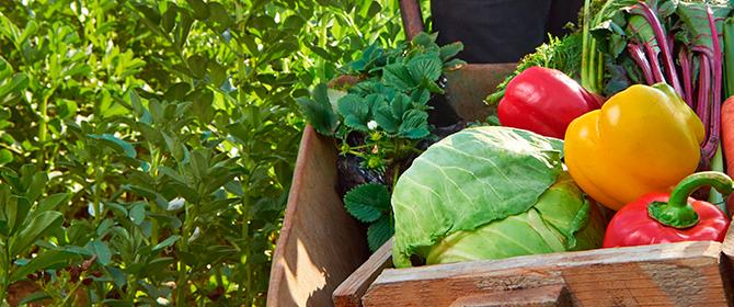 Como identificar se um alimento é orgânico