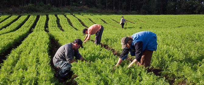 Ministério da Defesa é um dos pioneiros nas compras institucionais da agricultura familiar